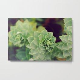 Myrtle Spurge - Euphorbia Myrsinites - Nature Photography Metal Print
