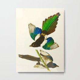 American Magpie Hand Drawn Illustrations Vintage Scientific Art John James Audubon Birds Metal Print