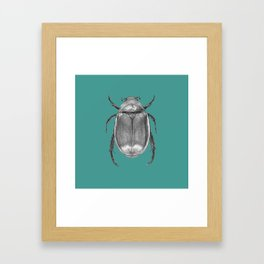 Insect Framed Art Print
