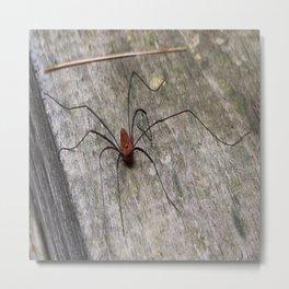 A Daddy Long Leg Spider Metal Print