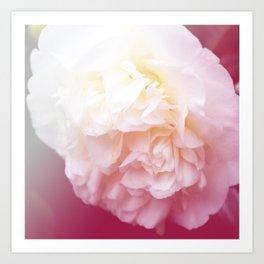 *Pinklight - Peony Art Print