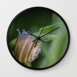 Snail on green #2 Wall Clock