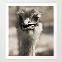 ostrich Art Prints featuring Ostrich by Raymond Earley