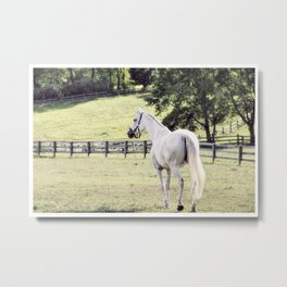 """""""A miraculous kind of horse"""" Metal Print"""