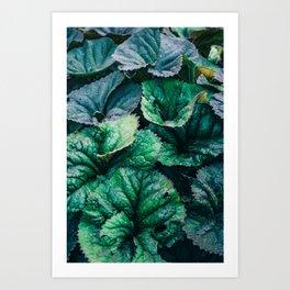 Blue Green Wet Leaves Art Print