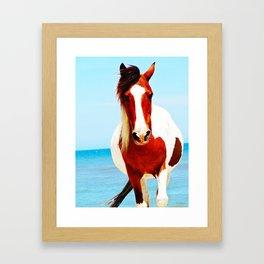 Blue Beach Pony  Framed Art Print
