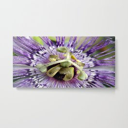 Purple Passion Flower Close Up Metal Print