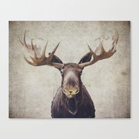 moose Canvas Prints featuring Moose by Retro Love Photography