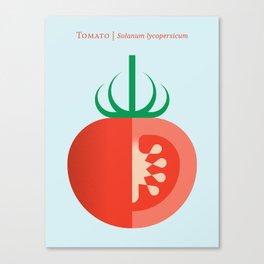 Vegetable: Tomato Canvas Print