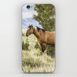 Stallion Relaxing on So Steens Mountain iPhone Skin
