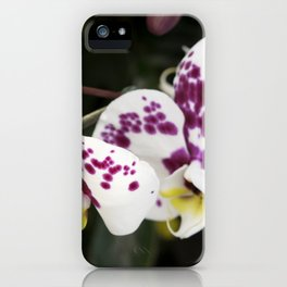 Longwood Gardens Orchid Extravaganza 24 iPhone Case