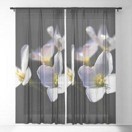 Cardamine Pratensis Flowers Sheer Curtain