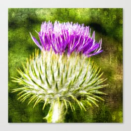 Flower of Scotland Oil Paint effect. Canvas Print