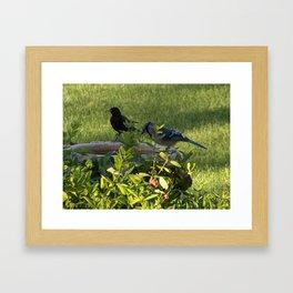 A Bluejay and a Black Bird Enjoy a Drink Framed Art Print