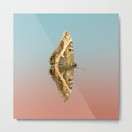 Black Witch Moth Metal Print