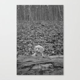 Nature Talks Back Canvas Print