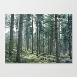 The pines forêt Canvas Print