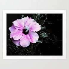 Pink Silk Art Print