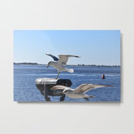 Seagulls in Southport NC Metal Print