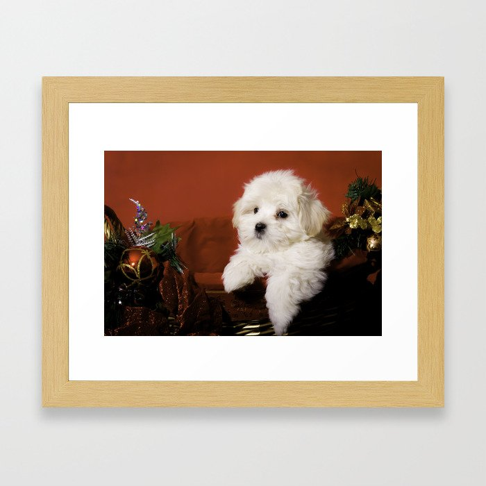 Fluffy Maltese Puppy Relaxing in a Gold Basket with Christmas Decorations Framed Art Print