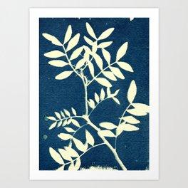 Botanicus (5), Botanical Art Print, Art Print, Botanical Poster, Vintage Print Art Print
