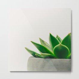 Simple Succulent Metal Print