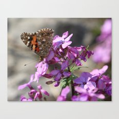 Painted Lady Butterfly on Pink Flowers Canvas Print