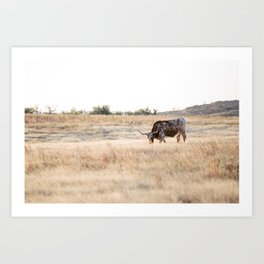 Longhorns 01  Art Print
