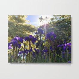 Iris Light Metal Print