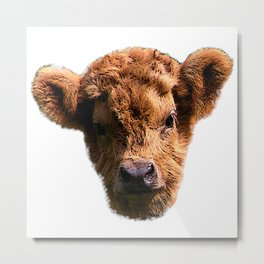 Calf head canvas, calf, baby cow Metal Print
