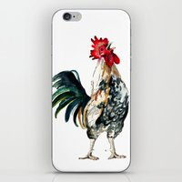 rooster iPhone & iPod Skins featuring Rooster by Bridget Davidson