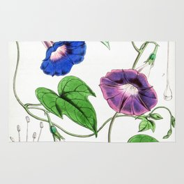 A Purging Pharbitis Vine in full blue and purple bloom - Vintage illsutration Rug