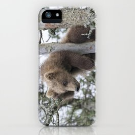 Baby Grizzly Bear (Cub) in Tree iPhone Case