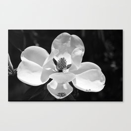 Magnolia In Black And White Canvas Print