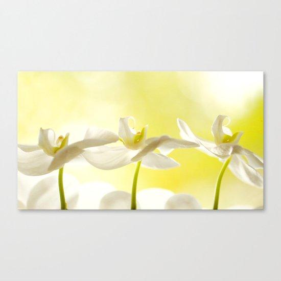 Three Ballerinas Canvas Print