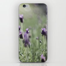 lavender in summer light iPhone & iPod Skin