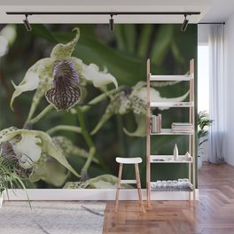 Longwood Gardens Orchid Extravaganza 22 Wall Mural