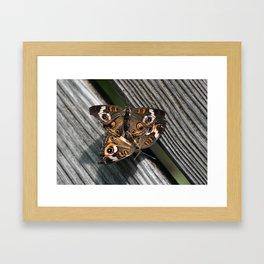 in love ... Buckeye Butterfly (Junonia coenia) Framed Art Print