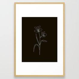 Amancay Wildflower in black Framed Art Print