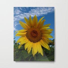 Picturesque Sunflower Metal Print