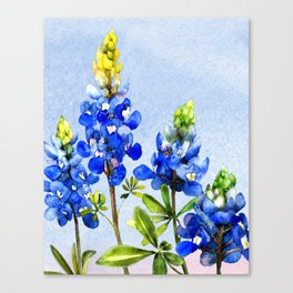 Bluebonnets 1 Canvas Print