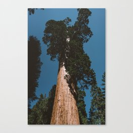 Sequoia National Park VII Canvas Print