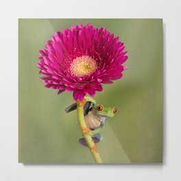 Red Eyed Tree Frog on a Flower Metal Print