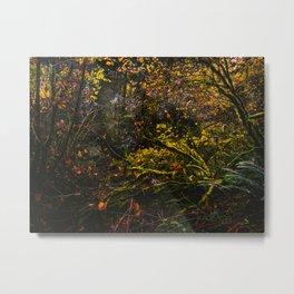 Oregon Forest III Metal Print