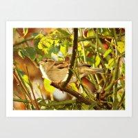 sparrow Art Prints featuring Sparrow by Judy Palkimas