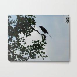 Bird in tree Metal Print