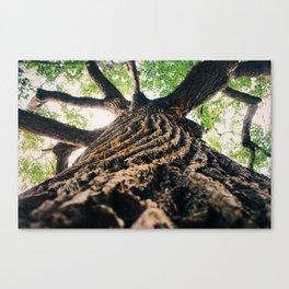 Ant's eye Canvas Print