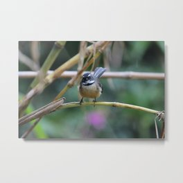 Staunch Fantail Metal Print