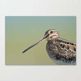Snipe Canvas Print