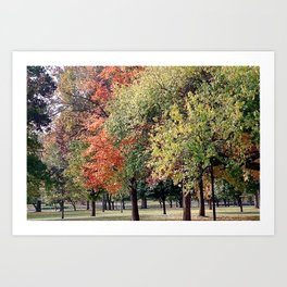 Changing Leaves Art Print